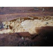 Dezinfekcija in obnova zaključnega zaščitnega sloja